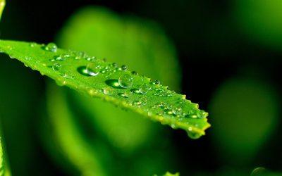 """Repubblica – Greenpeace: """"Come le sostanze chimiche entrano nel nostro corpo"""""""